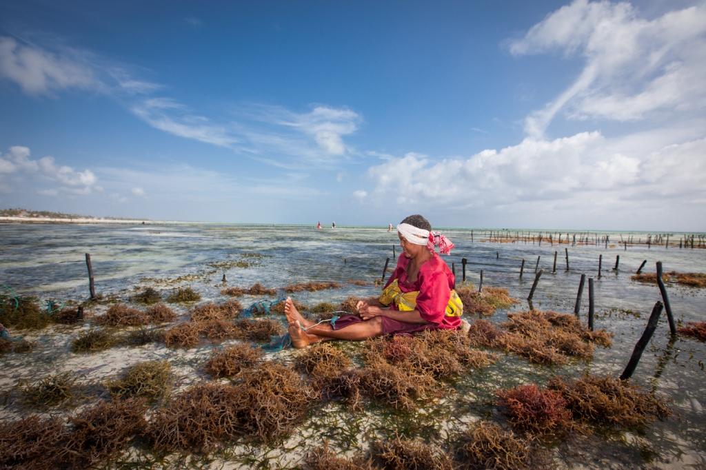 Seaweed_jambiani_land_2